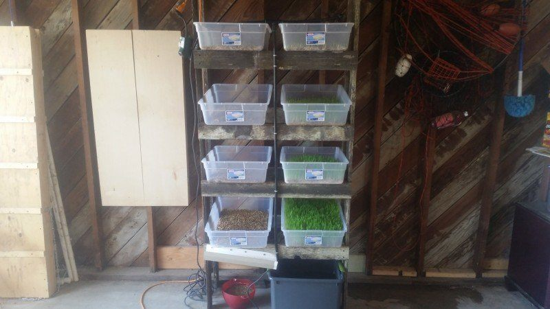 how to make a homemade fodder system