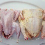 Growing protein: keeping chickens for meat
